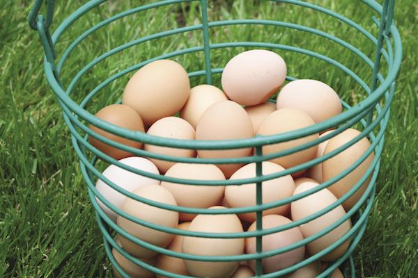 Eggs_opt