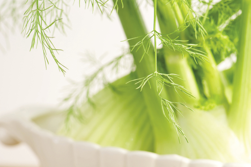 Fennel1-of-1-3_opt