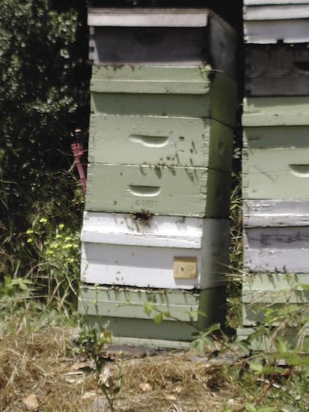 Honig owlbox3 (2)_opt