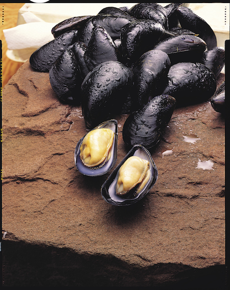 Mussels_opt